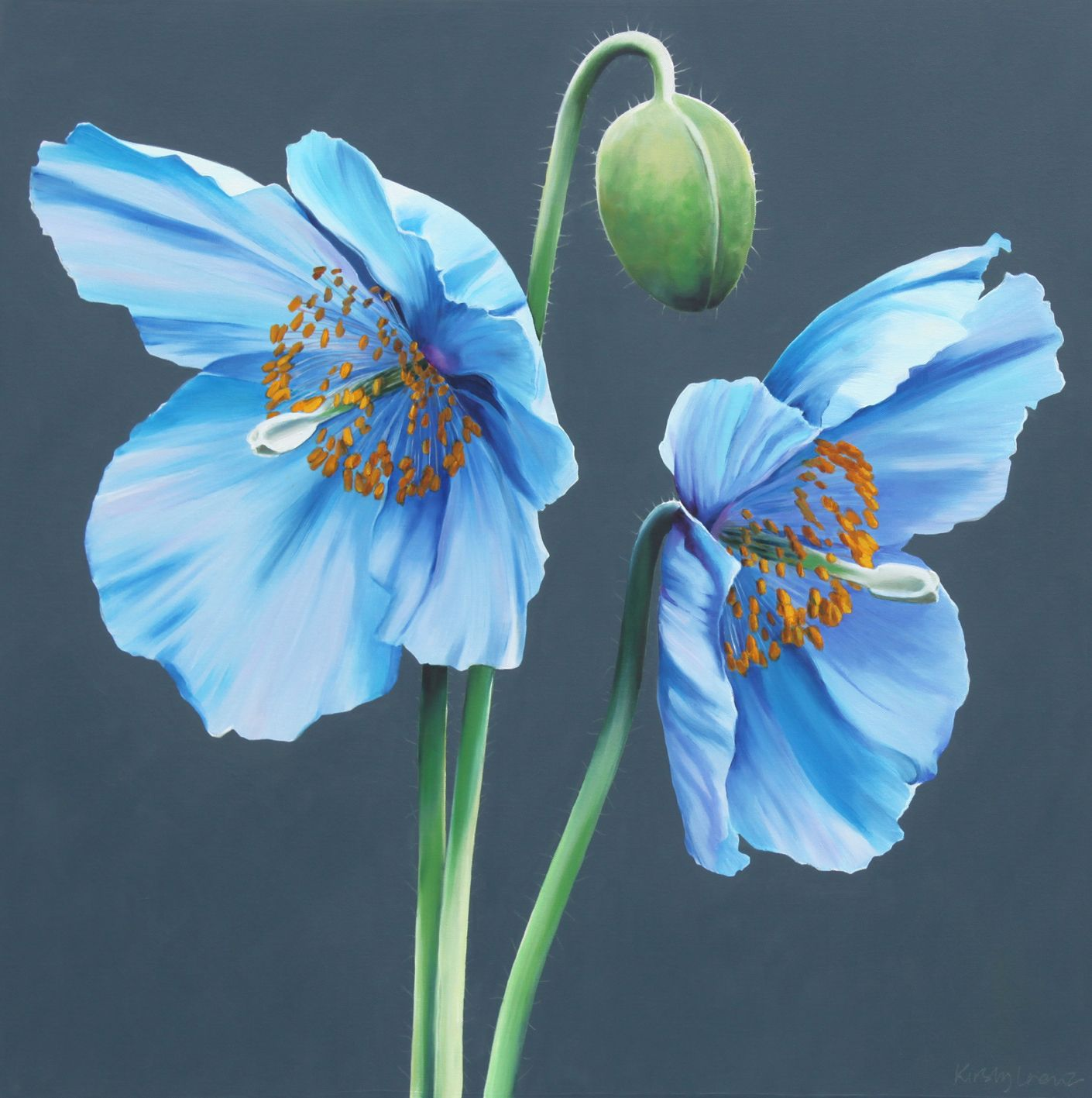 Pin By Neva Pead On Color Blue Pinterest Blue Poppy Flowers And