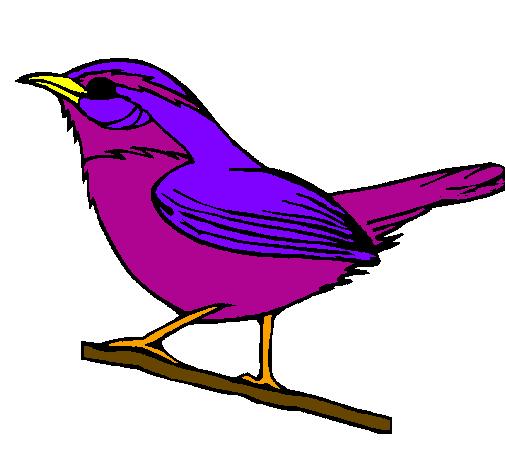 Passaro Desenho Colorido Pesquisa Google Gatinho Desenho