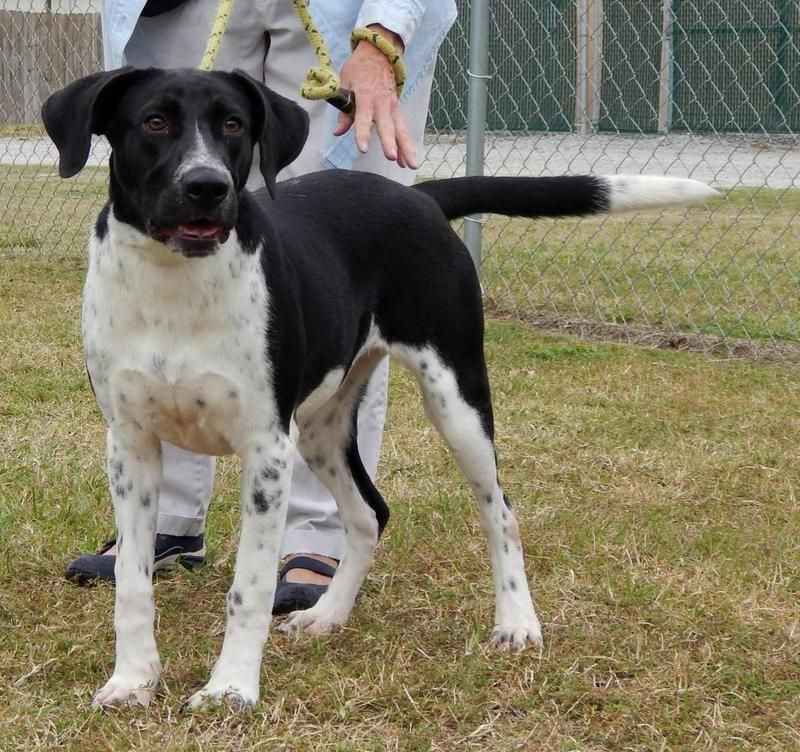 10++ Colleton county animal shelter ideas