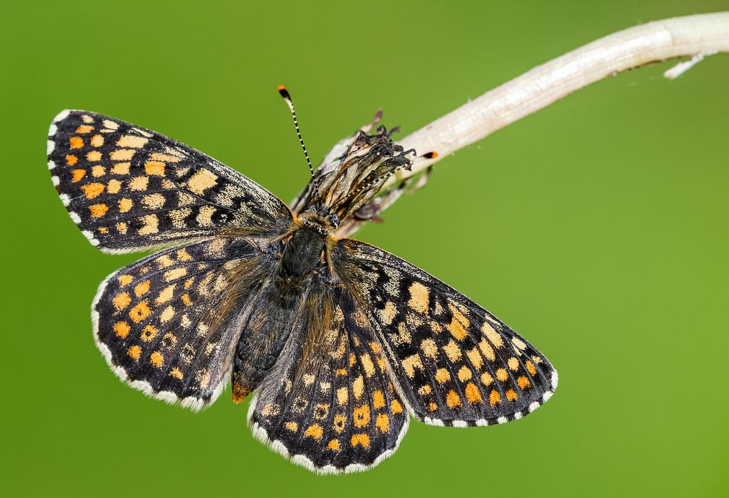Charaxes14 posted a photo:  Biatorbágy