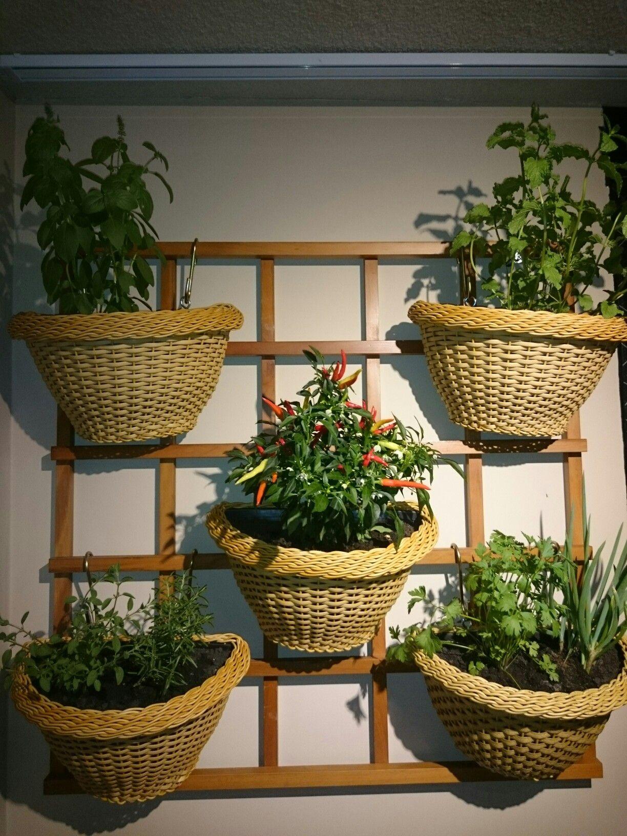 Horta Vertical No Meu Novo Ap Id Ias Sacada Pinterest Hortas  ~ Horta De Temperos Na Cozinha