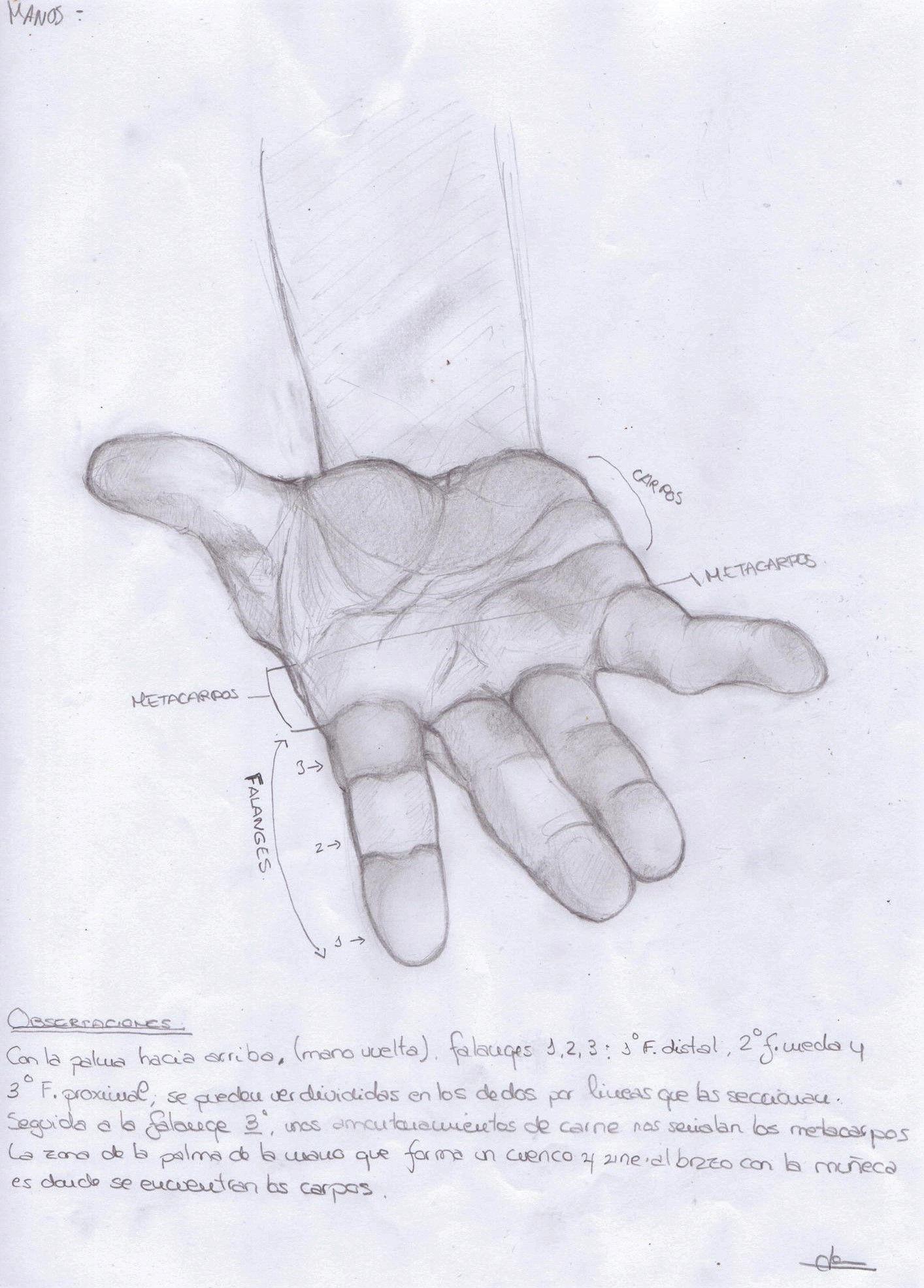 Anatomía Manos 2 por Jense | Dibujando | Art Instruction | Pinterest