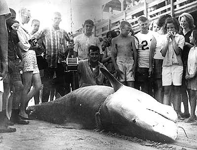 1 780 Pound World Record Tiger Shark Caught By Walter Maxwell