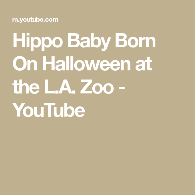 Hippo Baby Born On Halloween At The L A Zoo Youtube In 2020 Baby Born Zoo Hippo