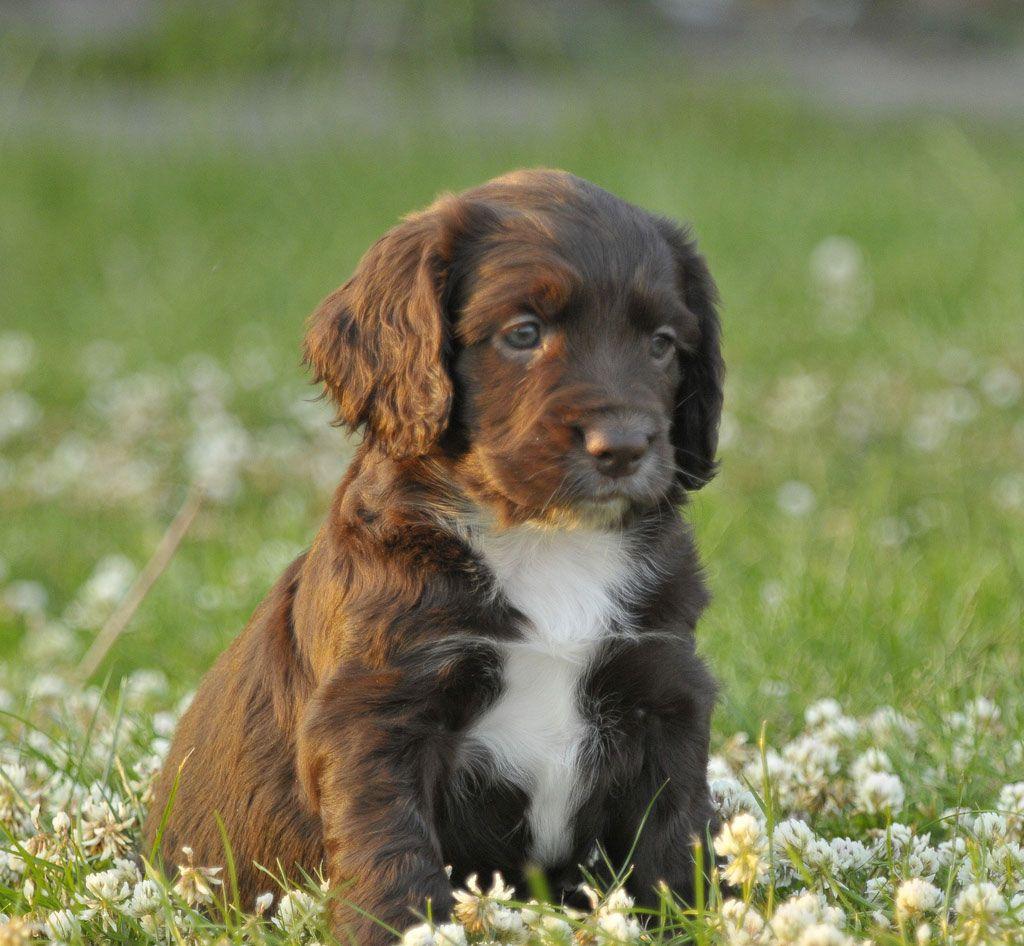 Download Puppy Brown Adorable Dog - 94fba15730dc6e6d47a2b23fd2509382  Trends_271346  .jpg