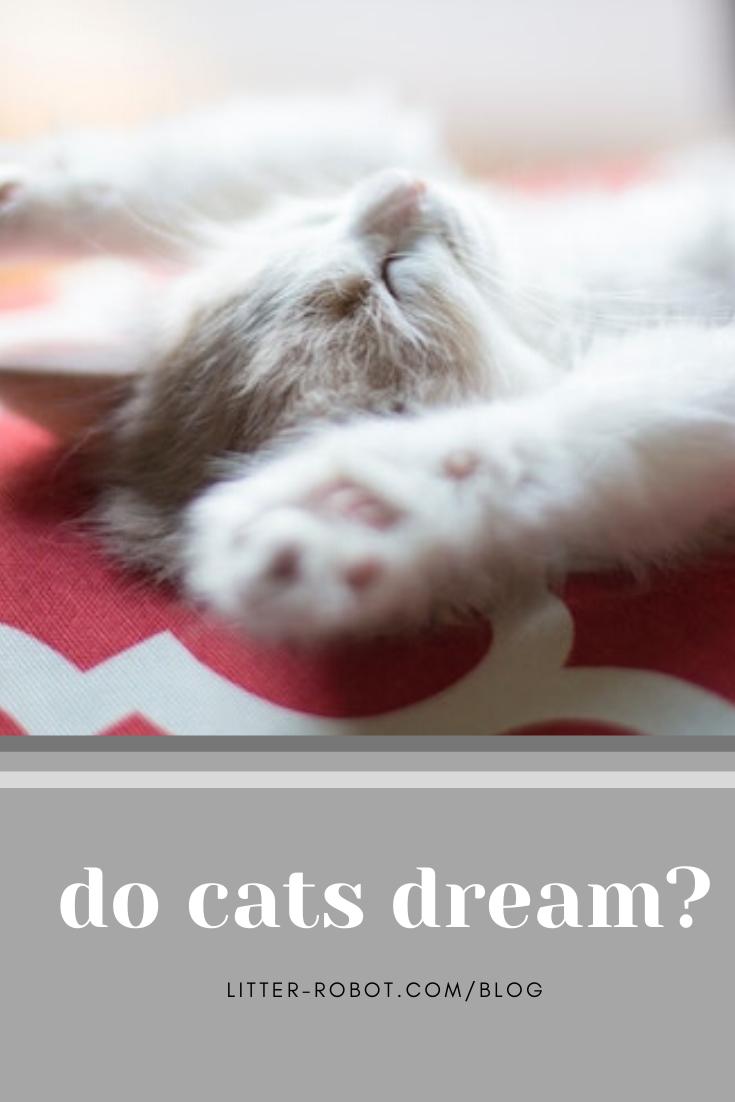 Zzz... Do Cats Dream? Sleepy cat, Cat sleeping, Kitty