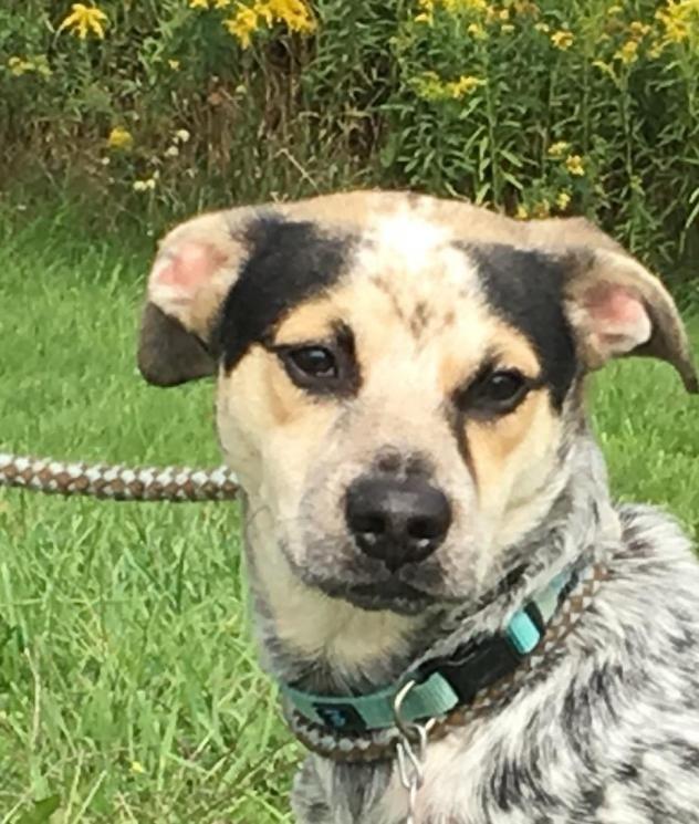 Adopt Klaus on (With images) Dog adoption, Australian