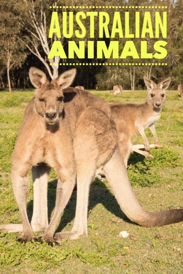 Where to Find Native Australian Animals Near Brisbane