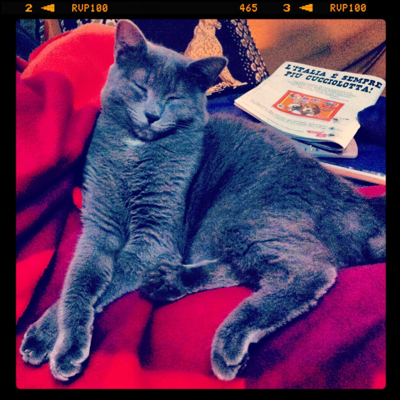Penelope #cats