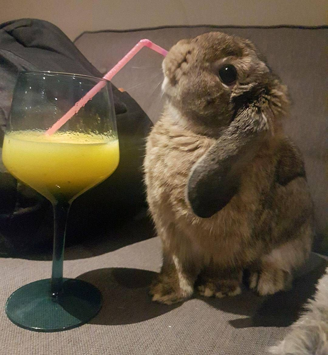 I love my pineapple juice in the mornings...   Fluffy bunny, Cute ...