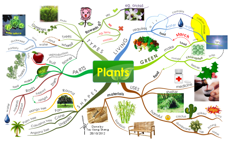 Image result for mapping and inforgraph kids plants
