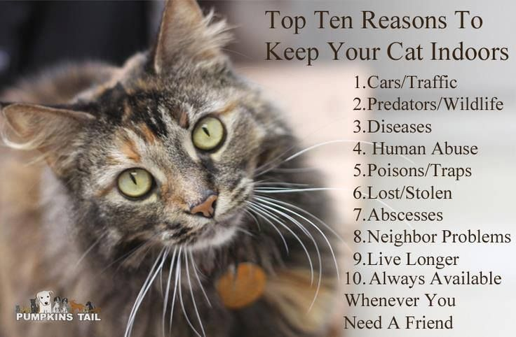 Top Ten Reasons To Keep Your Cat Indoors Cats Indoor Cat Crazy Cats