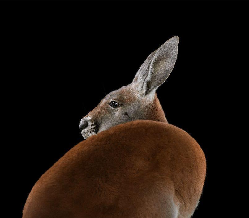 Incredible Studio Portraits Of Wild Animals By Brad Wilson: Affinity: Amazing Animal Portraits By Brad Wilson