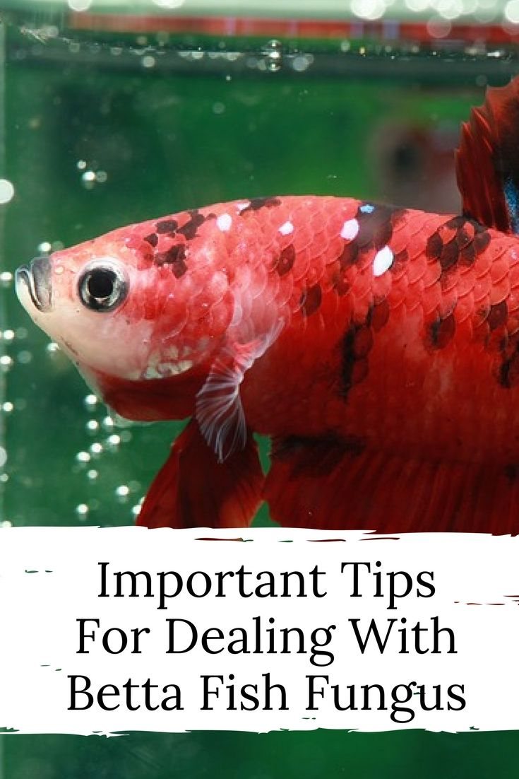 important tips on dealing
