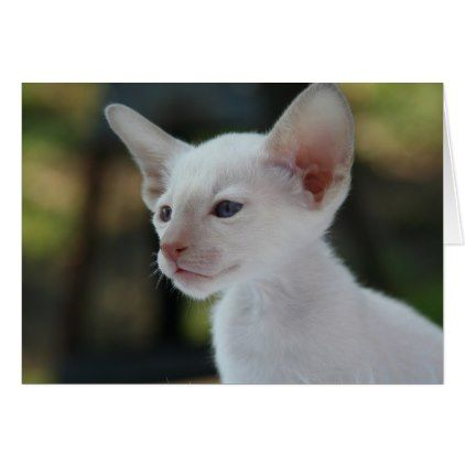 Baby Siamese Kitty Zazzle Com Fleas On Kittens Kittens Cutest Albino Cat