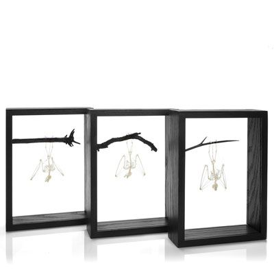 Framed Bat Skeleton. We are pleased to be able to offer these very ...