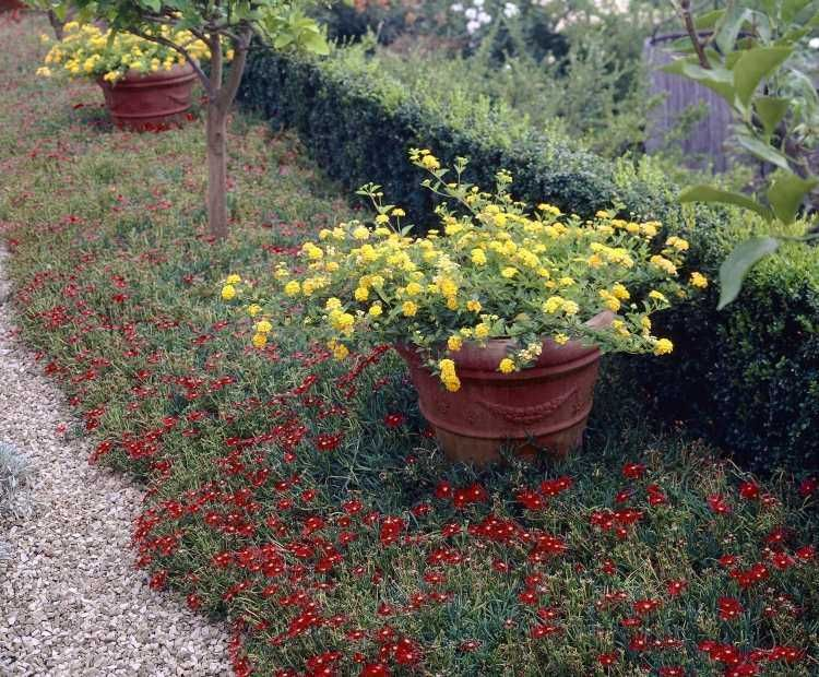 quelles plantes pour son jardin sec id es et conseils utiles plantes et jardin pinterest. Black Bedroom Furniture Sets. Home Design Ideas