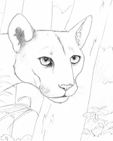 Coloring Book Download PDF Link Of Endangered Animals