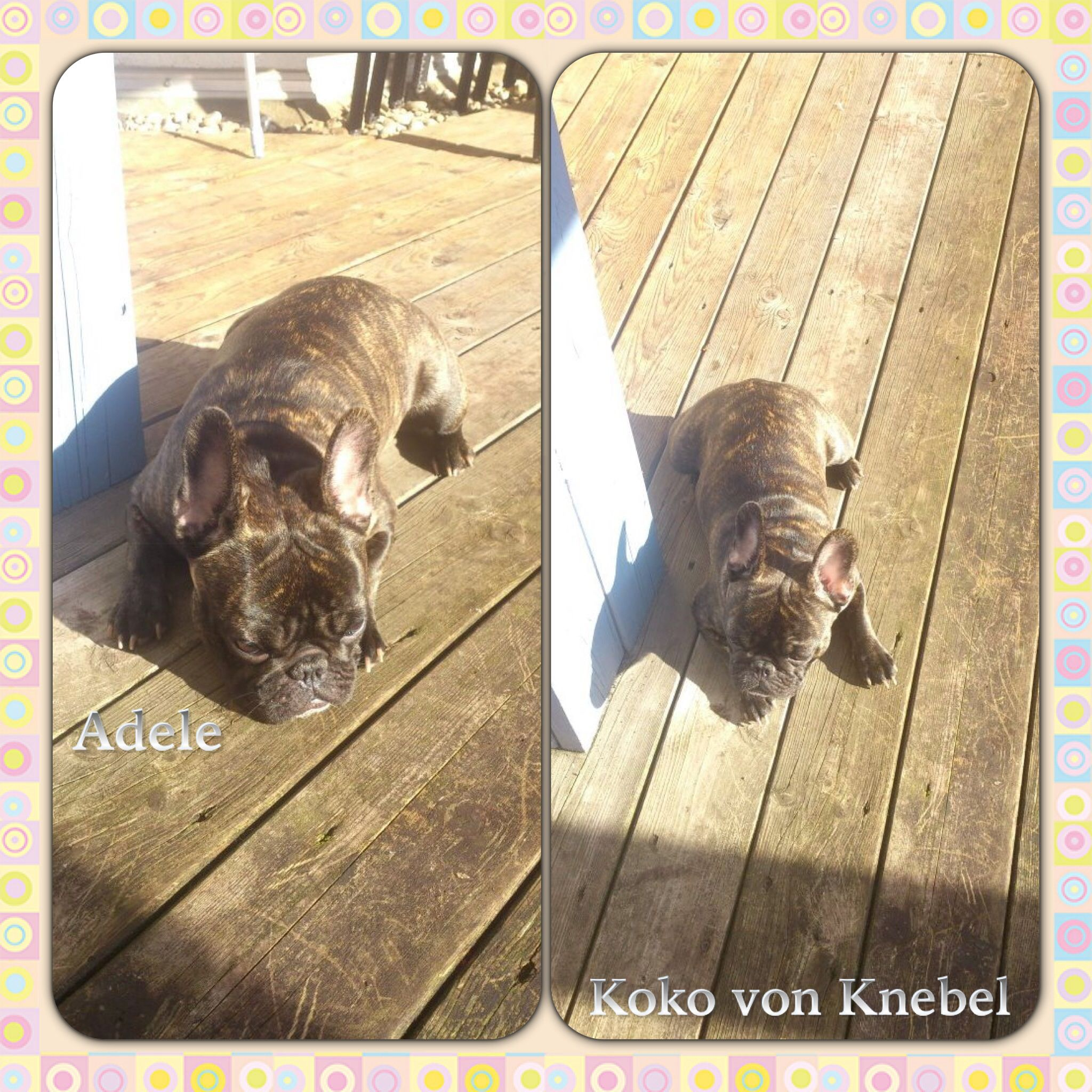 Adele She Is The 4 Pawed Friend Of Tanja Who Sends Us A Lot Of Great Pictures Through Fb Thank You Very Much Tanja
