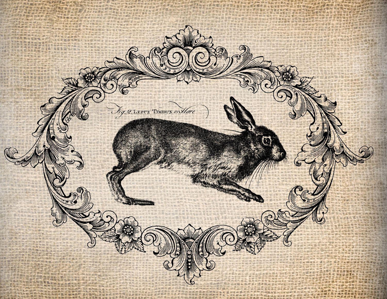 Antique French Rabbit Le Lapin Script Easter Illustration Digital Download For Papercrafts