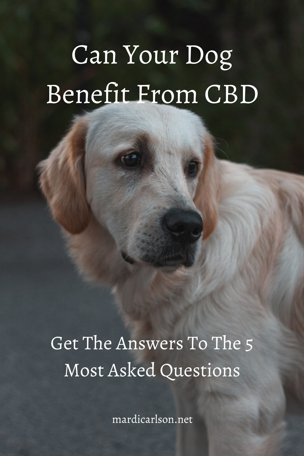 Pin on CBD oil for pets