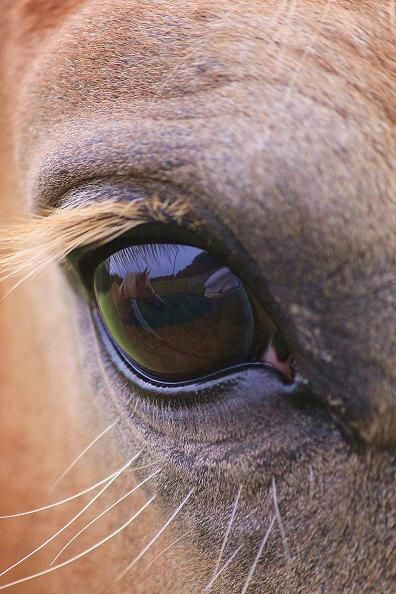 A Horse In The Horses Eye Animals Pinterest Horse Eye And Animal