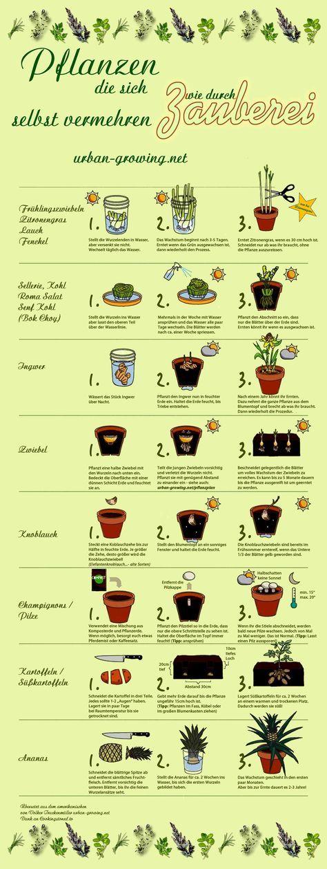 Pflanzenvermehrung wie durch Zauberei - gärtnern mit Kindern - www.urban-growing.net #veggiegardens