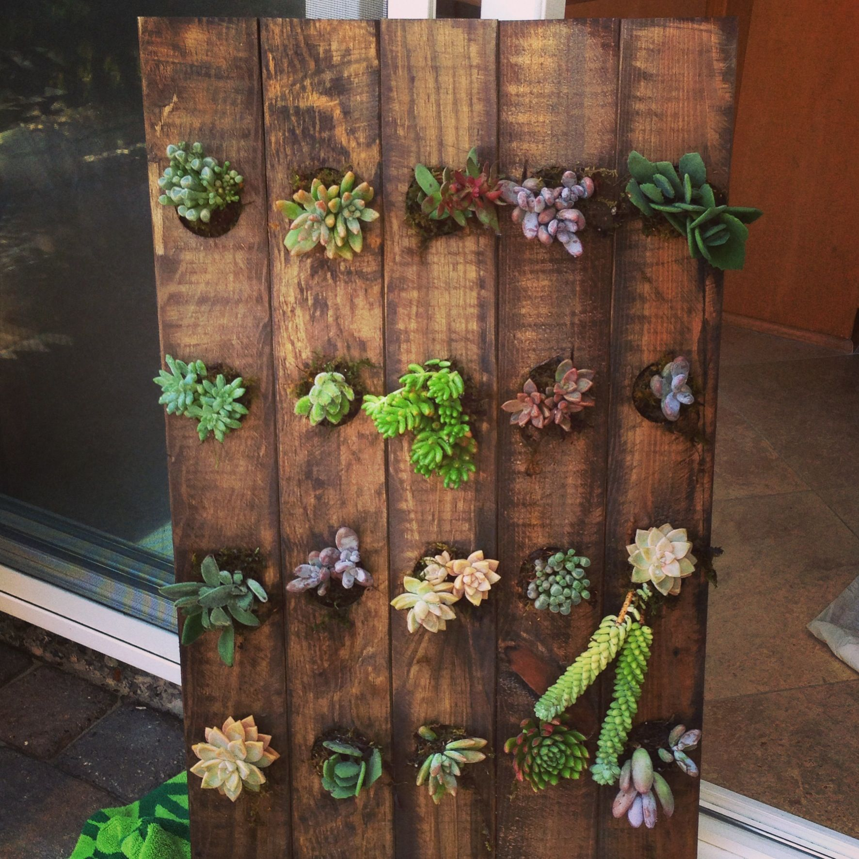 Vertical Succulent Garden- Made From A Wooden Wine Rack