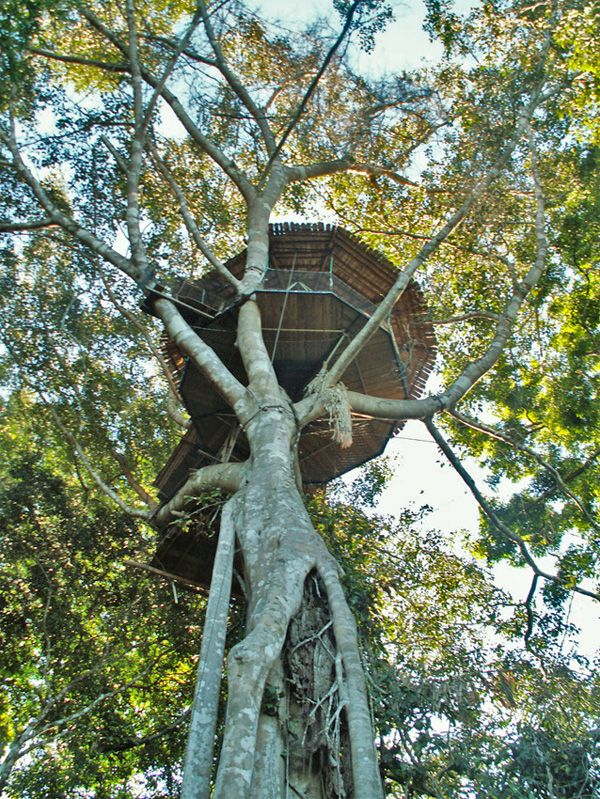 Treehouse Accomodation Reached By Zipline Only The Gibbon