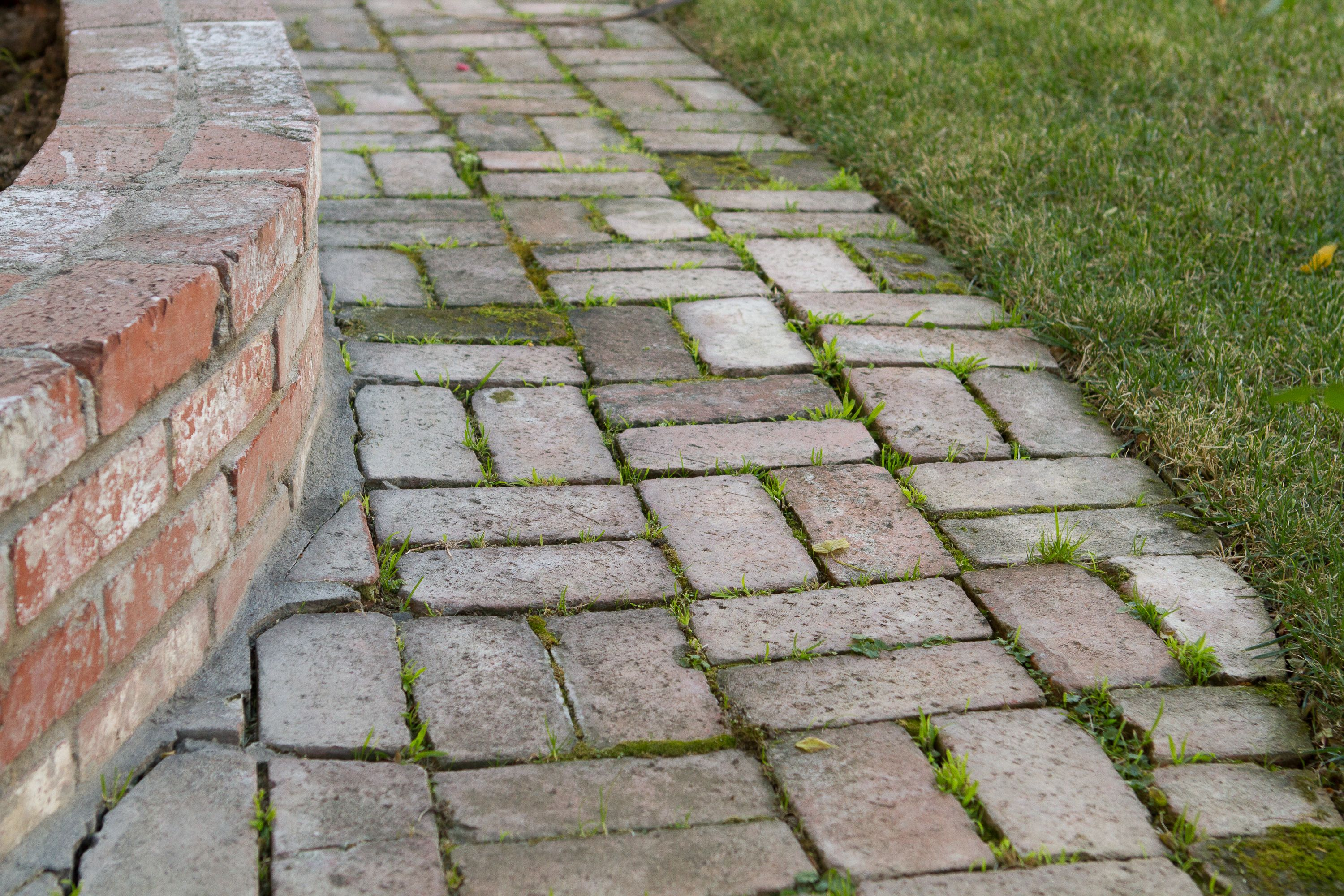 How to Remove Mold & Algae From Brick Pavers | Home Stuff ...