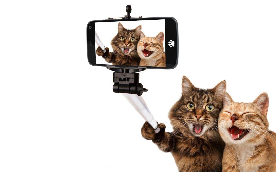 Wallpaper Et Fond D Ecran Chat Telephone Humour Animals Animaux Drole Photo En 2020 Animaux Amusants Fond D Ecran Chien Animaux