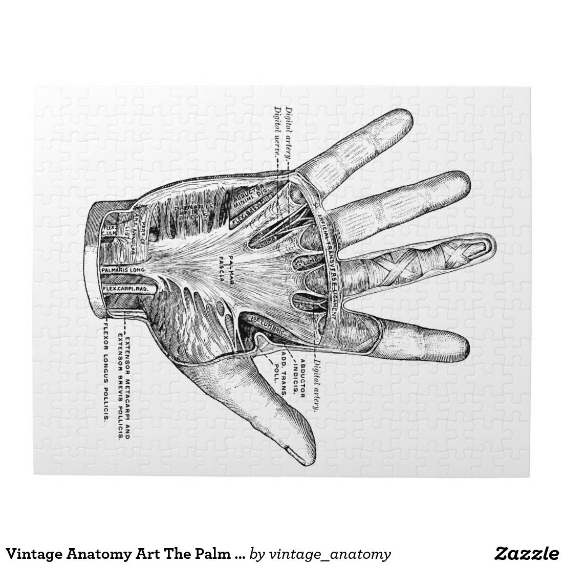 Vintage Anatomy Art The Palm of the Hand Jigsaw Puzzle | Pinterest ...