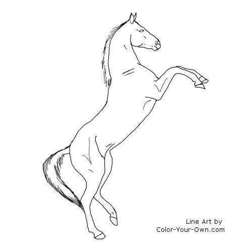 Akhal Teke Horse Rearing Line Art