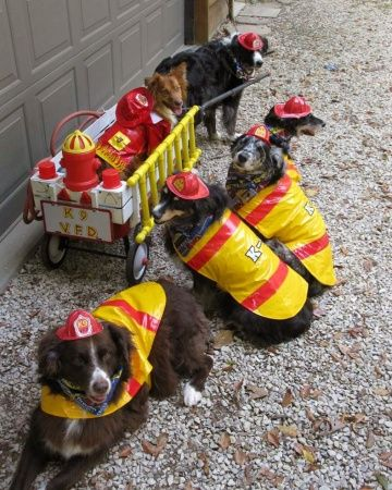 Halloween Projects Crafts Firefighter Pets Dog Love