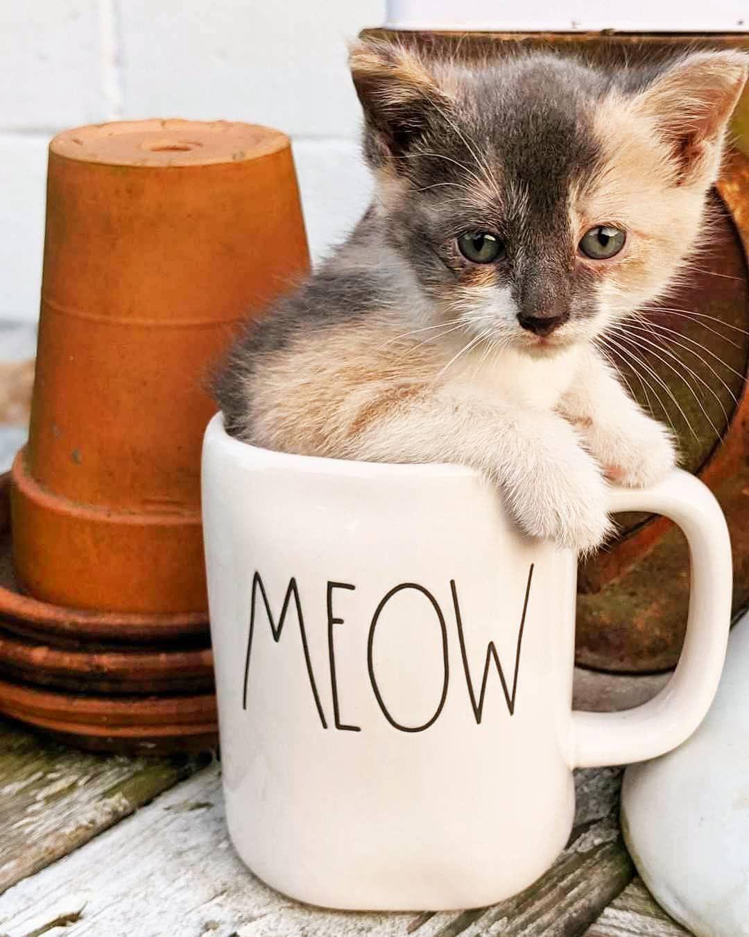 Happy Caturday Kittens Caturday Catlover