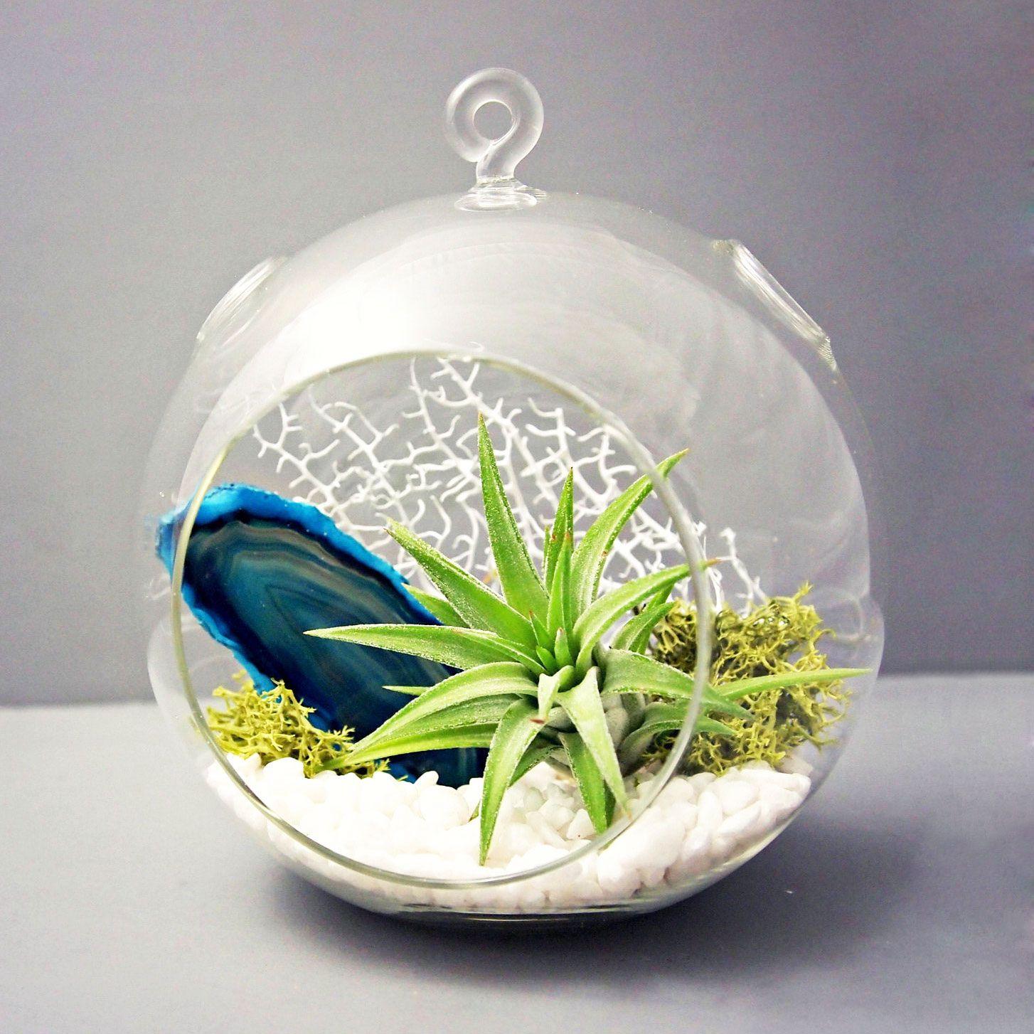 Earth and Water Agate Terrarium Air plant terrarium, Air