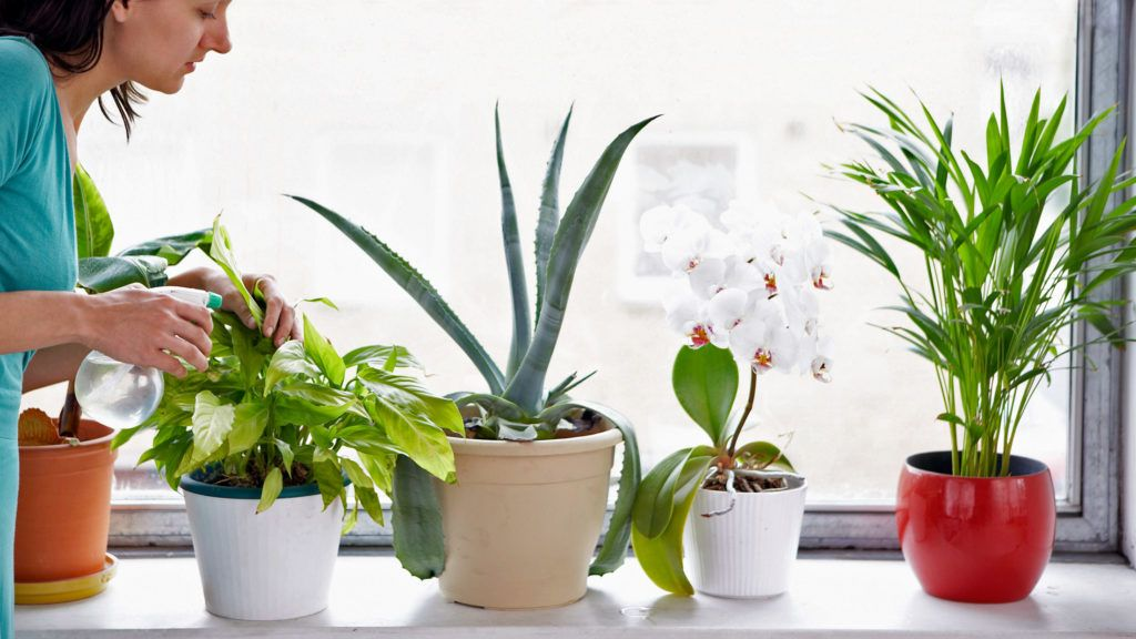 Картинки по запросу лекарственные свойства комнатных растений