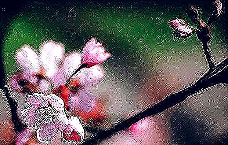 Exercises of evanescence - #artists #berlin #blog #blossom #cherry #hanami #meolog #nature #on #original #photographers #photography #pink #sakura #Source #spring #tumblr