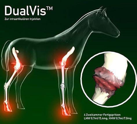 """Im ersten Teil zum Thema """"Arthrose beim Pferd"""" habe ich euch das Krankheitsbild vorgestellt. Nun möchte ich noch auf die Behandlungsmethoden zu """"sprechen"""" kommen. Die Behandlung Wie schon..."""