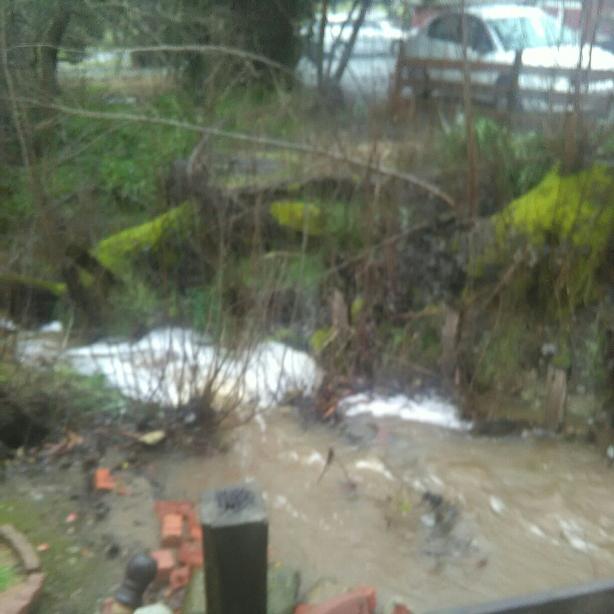 My babbling brook has turned into a rushing river...