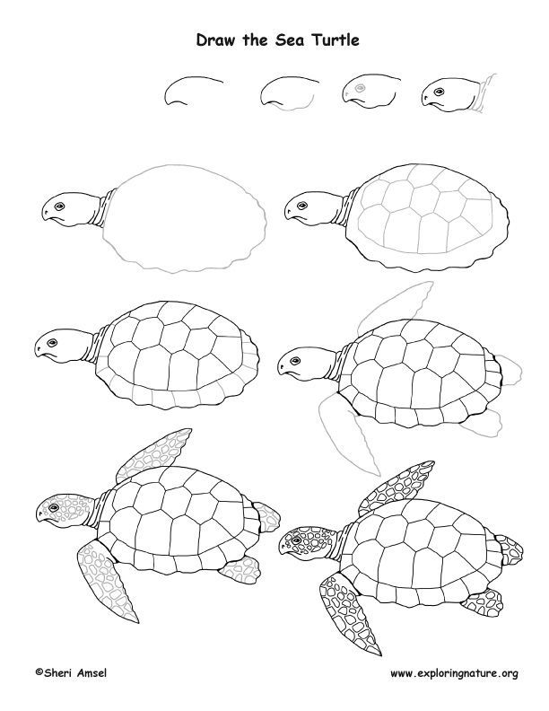 How To Draw A Sea Turtle sea turtle drawing lesson in 2020