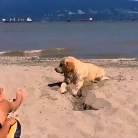 #funny #animals #dogs #hilarious #videos