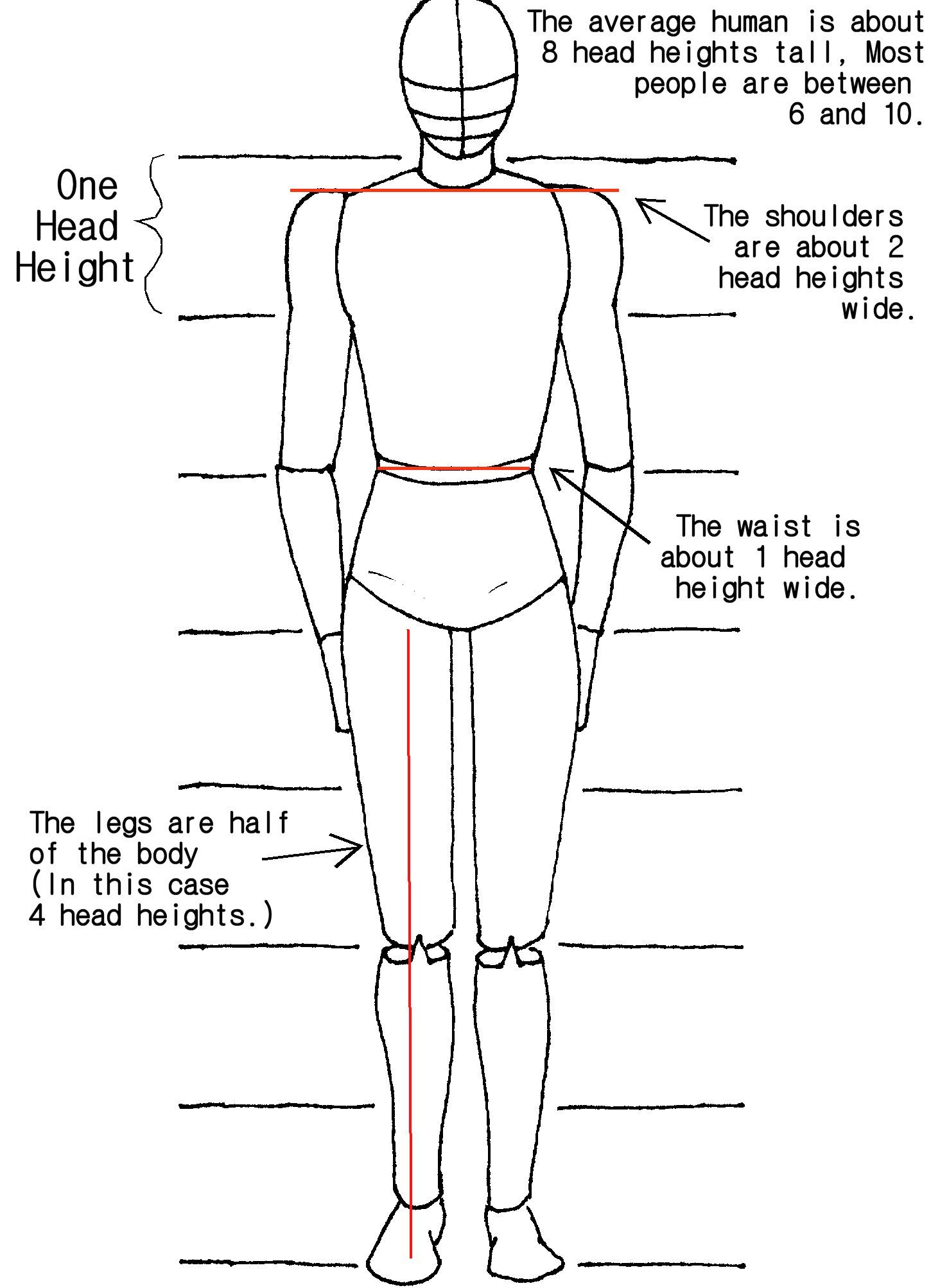 Body Proportions Tutorial by crazy-fae.deviantart.com on