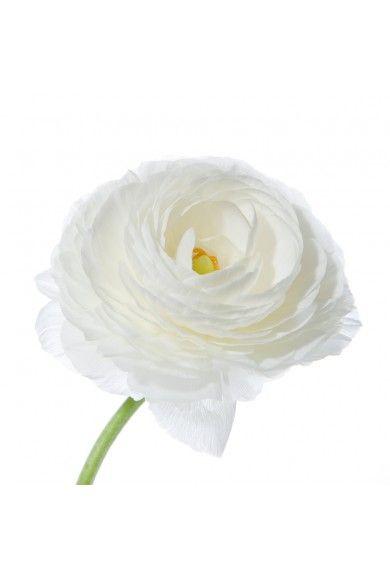 White Ranunculus Flower Muse Ranunculus Flowers Flowers Uk White Ranunculus