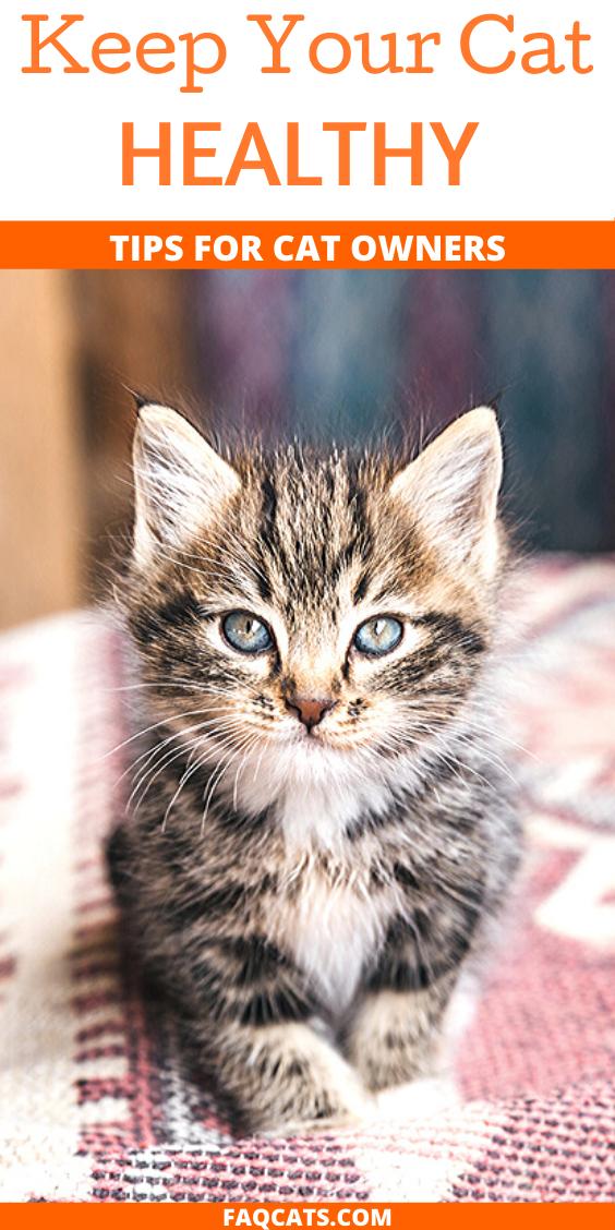 Cat Health Tips in 2020 Cat health problems, Cat health