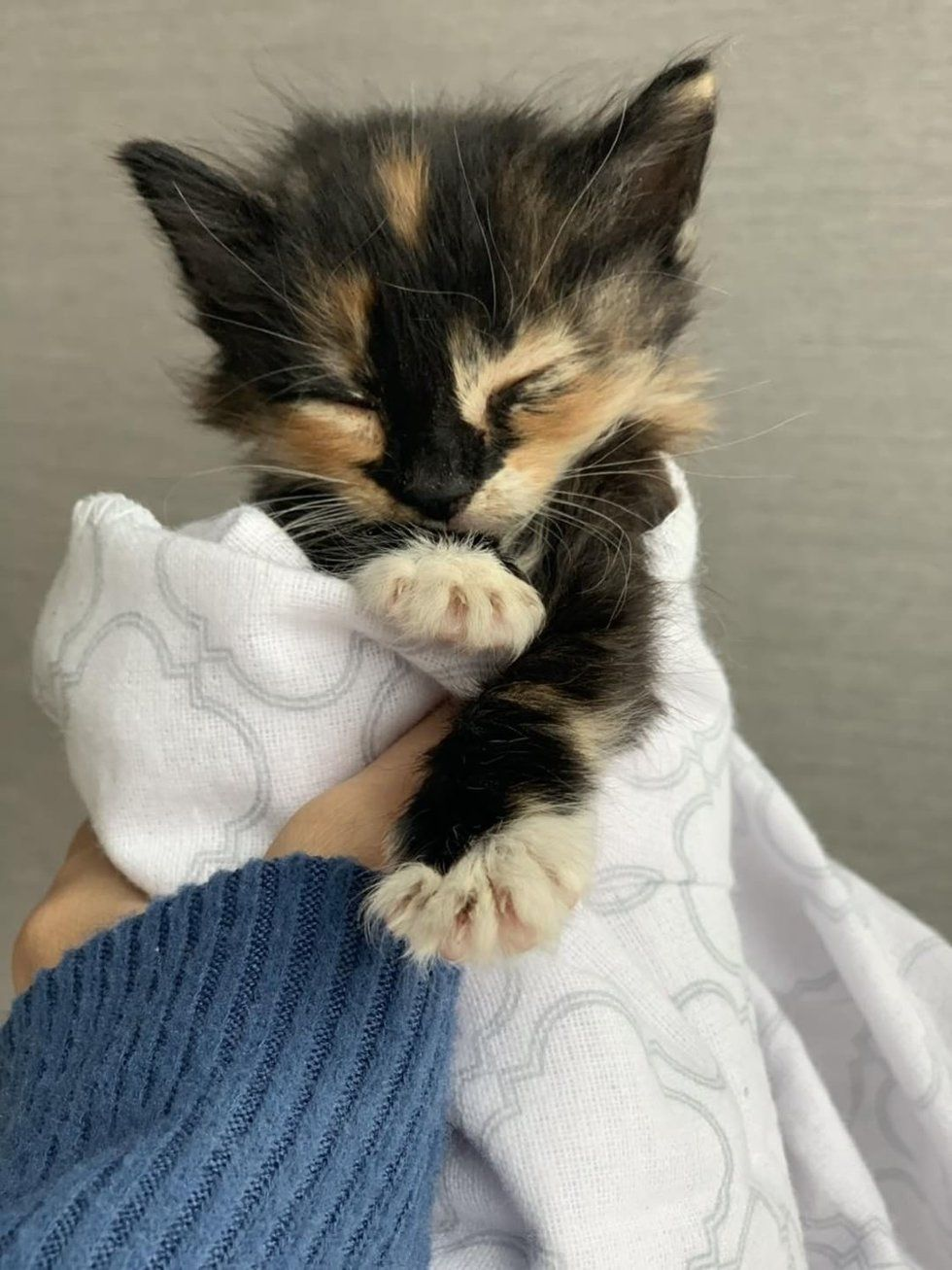 Kitten Who Was Found Crying Alone In Backyard Finds Someone She Loves Love Meow Kitten Calico Kitten Cats
