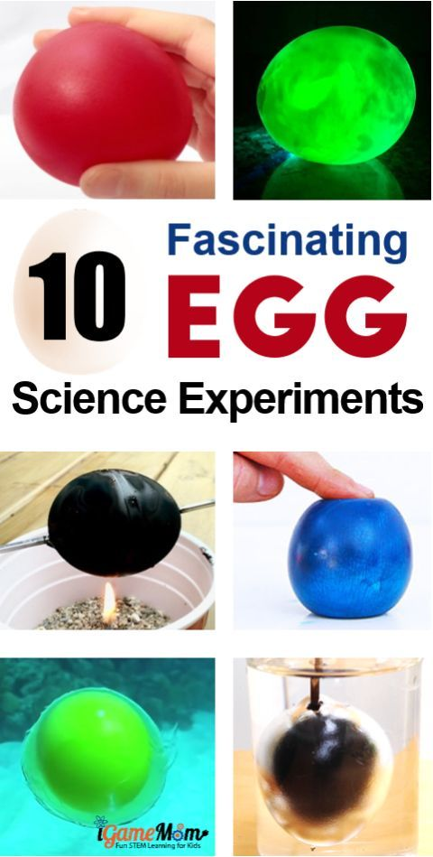 11 Fascinating Egg Science Experiments For Kids Science