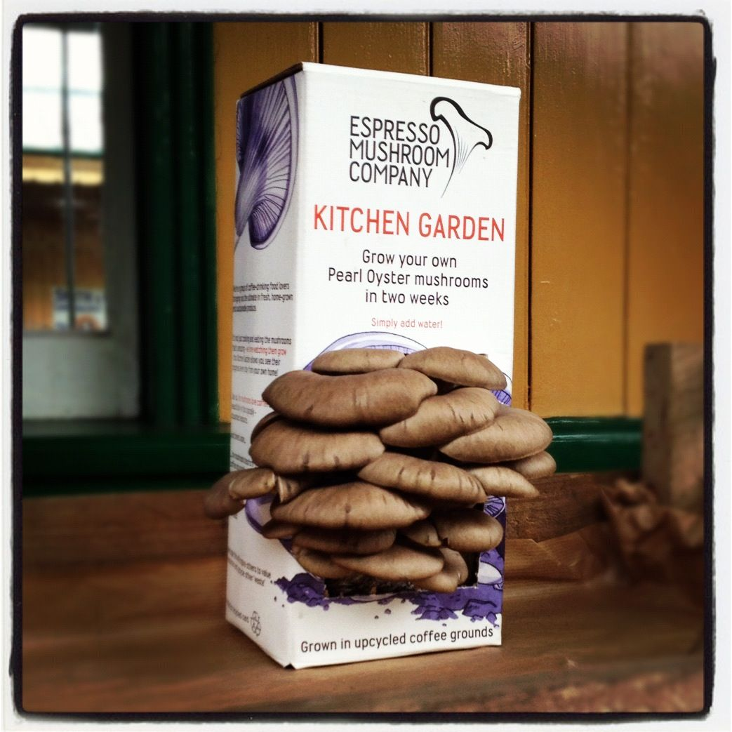Kitchen Garden Mushrooms Kitchen Garden Growing Oyster Mushrooms On Coffee Grounds Reuse