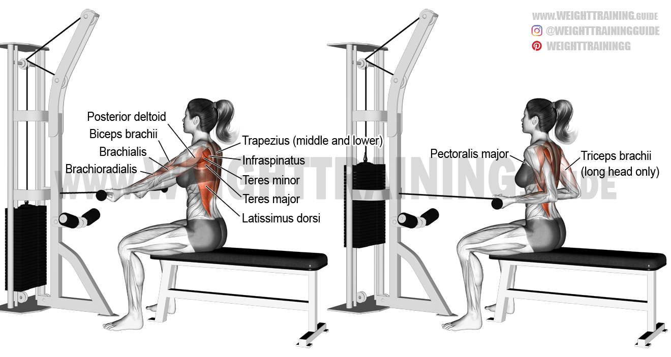 Straight-back seated underhand cable row exercise
