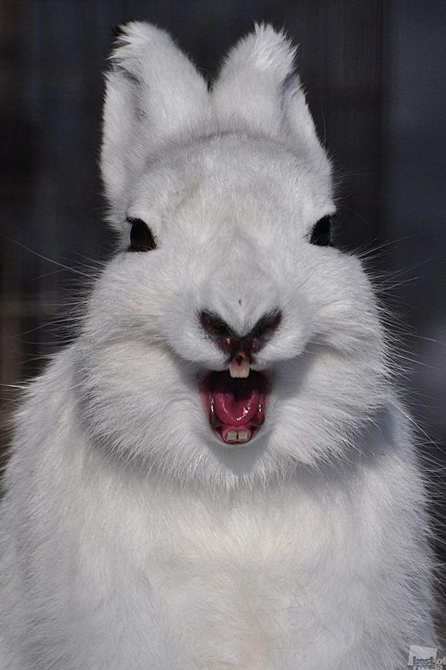 Картинка зайца прикол